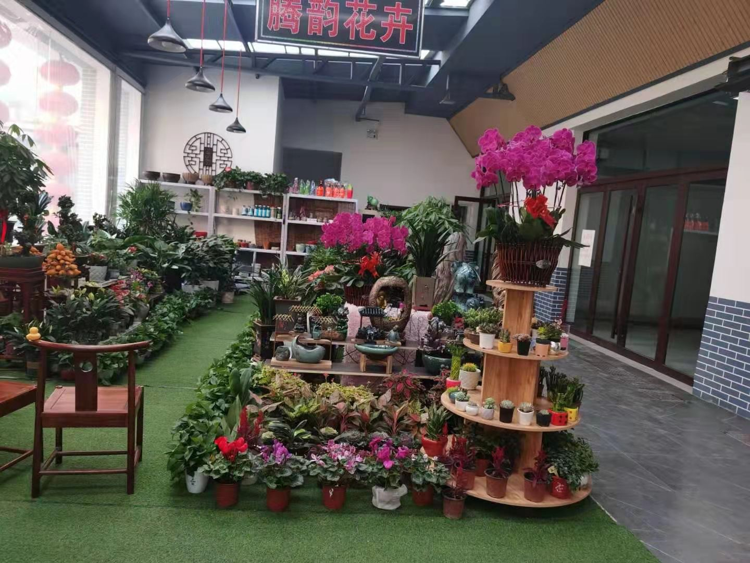太原花卉市场,太原花卉基地在哪里